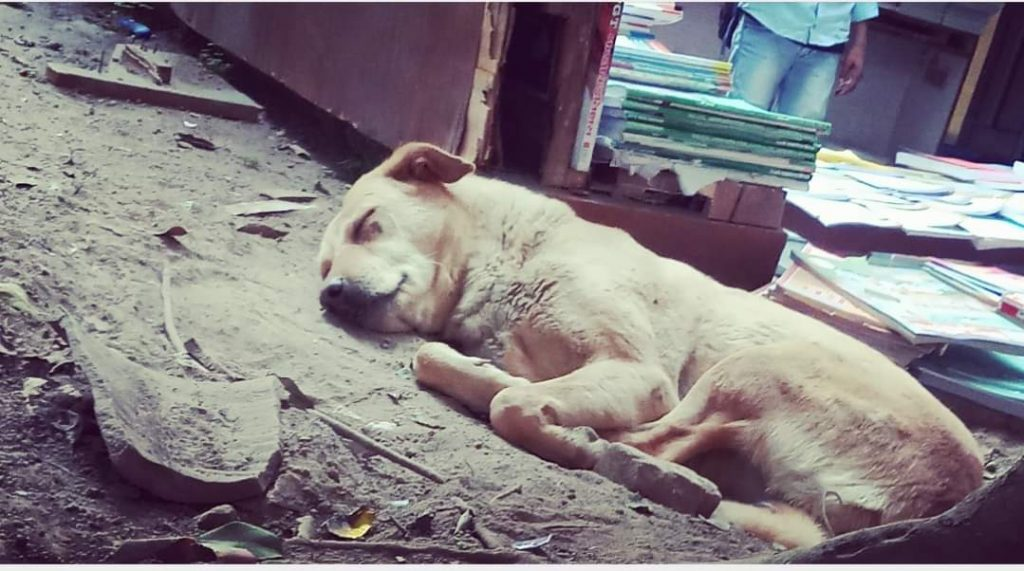 help stray dog