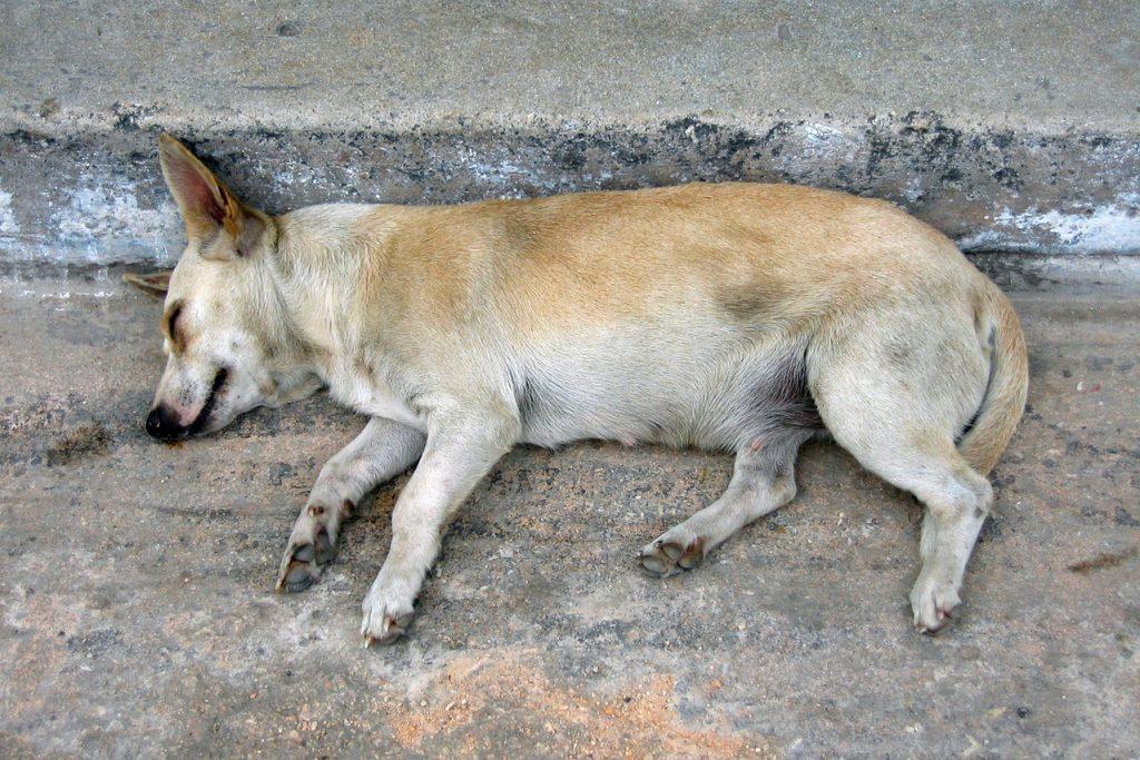 Stray dog sleeping on road