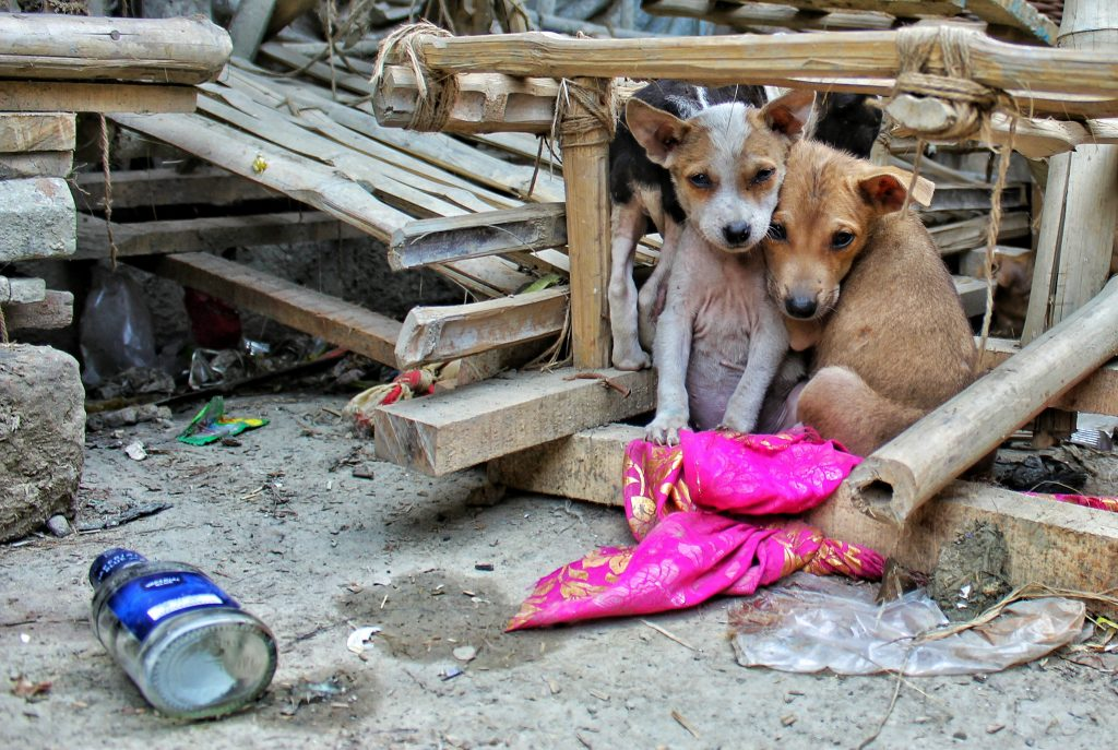 Rescue Stray Dogs