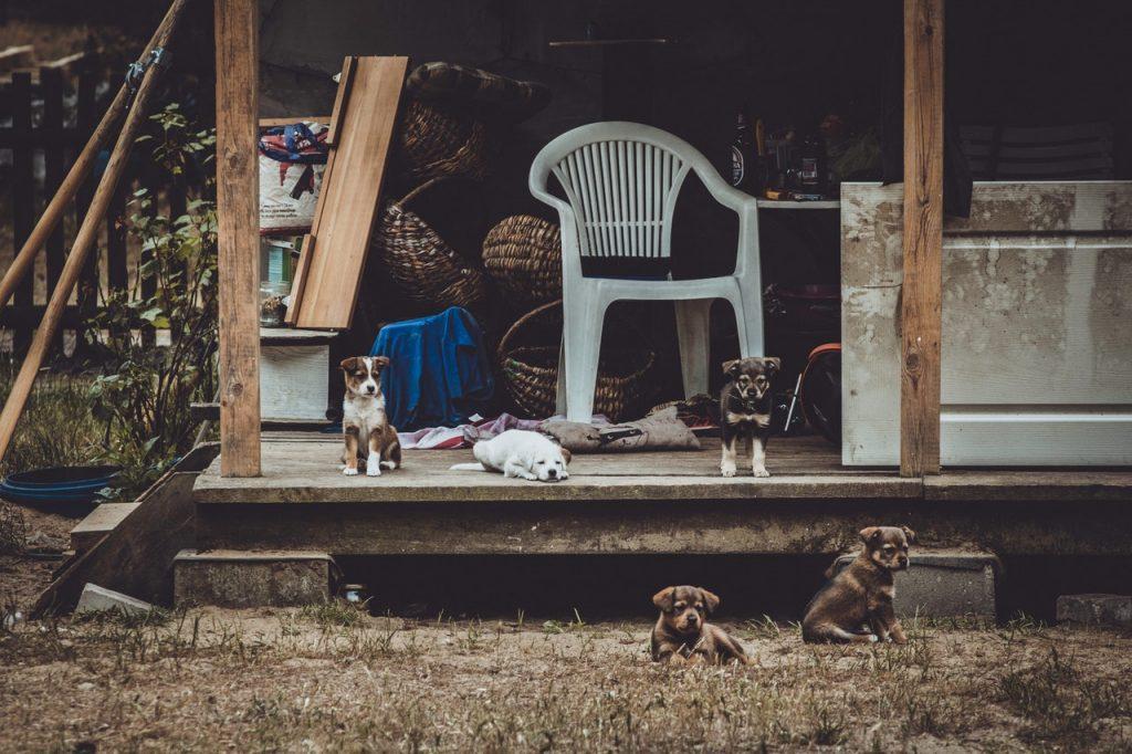 Myth Stray Dog Adoption